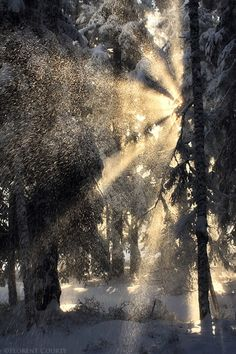 Silent forest (by Xavier Jamonet) Vercors, Alps, France. -