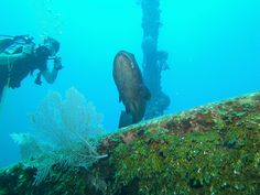 Diving El Aguila wreck with Subway Watersports