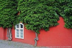 ... an ivy covered wall.
