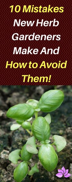10 Mistakes New Herb Gardeners Make And How to Avoid Them! - Awesome tips for new herb gardeners. Learn these tips before planting herbs