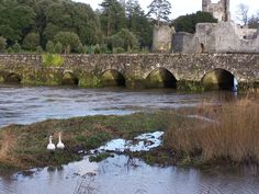 Adare Castle (also called Desmond) ,  and bridge over the Maigue River, County Limerick, Ireland  Photo: James L. Root