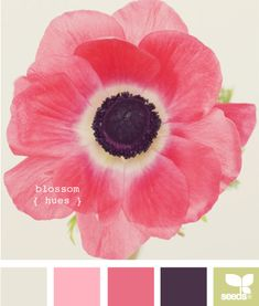 blossom hues - I am hoping for a little corner of my own space in the new house (reading nook, small office area, vanity area in the bedroom perhaps...)--these are my favorite colors. I'd love to use them in my personal space.