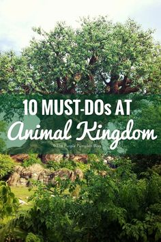 This is the second post in my must-do rides series for 100 Days Of Disney I'm going to share a list of the [Read More]