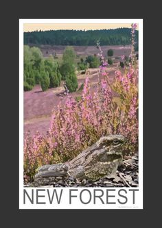 Nightjar in the New Forest (Art Print)