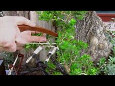 Diego Stocco - Music from a Bonsai - YouTube