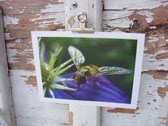 Schwebefliege - Insekt, Waal 2009  Abzug einer Originalfotografie, Format 13x18 mit weißem Rand