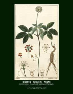 http://ctgpublishing.com/wp-content/uploads/2013/11/ginseng-botanical-print-turpin-herbs-and-spices.jpg