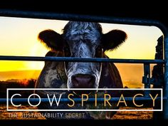 """YouTube...""""CATTLE FARM AND PIG"""".. VIDEO HOW MEAT IS UNSUSTAINABLE EATING SOURCE.."""