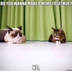 If you've visited the internet sometime in the past two years, you are well aware of the feline sensation known as Grumpy Cat. But I'm getting ready to blow your grumpy mind. Grumpy Cat is a I Love Cats, Cute Cats, Funny Cats, Funny Animals, Cute Animals, Funniest Animals, Animal Funnies, Pretty Cats, Beautiful Cats