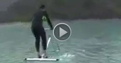 Wow Amazing Water Bird #Videos #Animated #Funny #Amazing  #Animals #Awesome #comedy #Crazy #Car crashes #Stunt #Prank #Horror #Robbery #humor #Informative