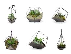 Handmade Glass Terrariums By Matthew Cleland Of Score+Solderu2013 According To  Old Faithful Shop