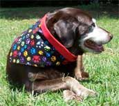 Paw print dog bandanas available in six sizes. Shown in photo is an extra large.