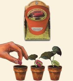 #Weltneuheit-Pflanze Deinen Namen