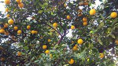 . Citrus Fruits, Pumpkin, Pumpkins, Butternut Squash, Squash, Gourd