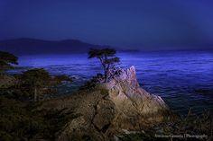 Pebble Beach, Lone Cypress