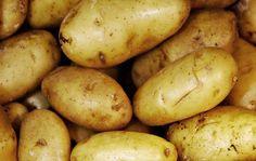 Kartofler er nemme at dyrke, da de kan vokse i både køkkenhave, spande og sække. Læs alt om, hvordan du forspirer, lægger, dyrker, høster og opbevarer dem.
