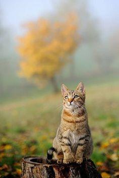 Fall in Golden