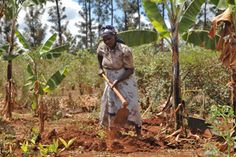 """Boys learning new ideas of masculinity around campfires in rural Africa and """"sisterhoods"""" formed to provide a common voice to women are starting to change attitudes about African women farmers, say the authors of a forthcoming book about gender and agriculture."""