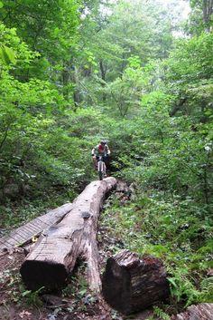Middle Run Natural Area Mountain Bike Trail in Newark, Delaware    SINGLETRACKS.COM