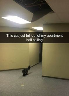92 Best Cats images in 2019