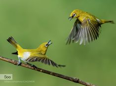 The fight by DrNagaraj #animals #pets #fadighanemmd