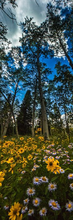 ~~Summer wildflowers on the transfer trail outside Glenwood Springs Colorado by Thomas O'Brien | tmophoto~~