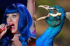 If Pop Stars Were Birds, These Are The Birds They'd Be