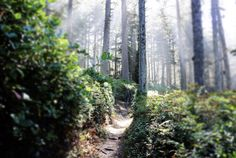 This Easy Oregon Hike Is Straight Out Of A Fairy Tale Oregon Nature, Oregon Forest, Grizzly Peak, Klamath Falls, Oregon Waterfalls, Oregon Road Trip, Cannon Beach, Nice View, Fairy Tales