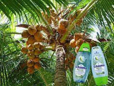 Daniele: Schauma Nature Moments Indonesian Coconut Water & ...   #buzzstore #buzzschauma #naturemoments #momenteinfamilie #schaumanaturemoments #schwarzkopf #schauma #shampoo #sampon #balsam #conditioner #haircare #blogger #coconut #lotusflower