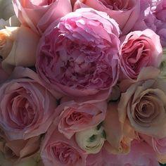 Peonies & Garden Roses.....Oh My!!! #dvflora #handtiedbouquet #theknot #weddingwire #peonies #gardenroses #hydrangea #ranunculus #eucalyptus #floristofyourdreams  #PFOP by pocketfullofposiesflorist