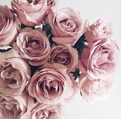 Uploaded by h a p p i n e s s. Find images and videos about flowers, rose and pink on We Heart It - the app to get lost in what you love. Pretty In Pink, Beautiful Flowers, Image Deco, Pink Roses, Lavender Roses, Blush Roses, Peonies, Planting Flowers, Flower Arrangements