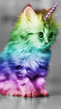 New Ideas For Wallpaper Iphone Cute Kawaii Galaxies Tier Wallpaper, Cat Wallpaper, Animal Wallpaper, Wallpaper Iphone Cute, Trendy Wallpaper, Rainbow Wallpaper, Galaxy Wallpaper, Iphone Wallpapers, Unicorn Cat