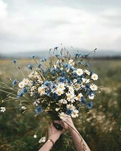Blue and white floral bouquet photo by Dominika Brudny at Do.- Blue and white floral bouquet photo by Dominika Brudny at Dominika Brudny on Ins Blue and white floral bouquet photo by Dominika Brudny at Dominika Brudny on Ins… – - Colorful Flowers, Wild Flowers, Beautiful Flowers, Beautiful Pictures, Flowers Nature, Spring Flowers, Nature Plants, Boquette Flowers, Bunch Of Flowers