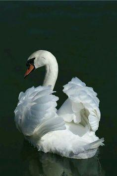 Beautiful and elegant! (winters-guardian.tumblr.com)