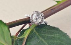 daussi cushion, cushion cut
