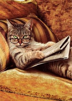 I told you not to disturb me when I'm reading my paper!