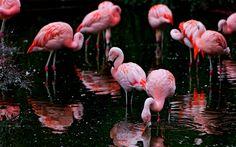 pink flamingos analysis
