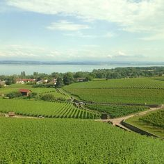 Lac de Neuchâtel - Vignes - Suisse Swiss Miss, Swiss Switzerland, Outdoor Travel, Vineyard, Germany, Outdoors, Italy, Amazing, Pictures