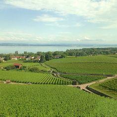 Lac de Neuchâtel - Vignes - Suisse