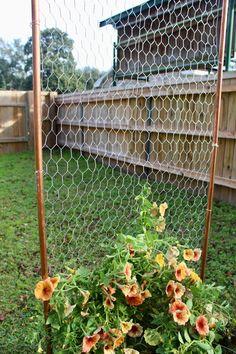 Wire Trellis, Metal Garden Trellis, Plant Trellis, Wooden Trellis, Garden Privacy, Garden Bed, Chicken Garden, Wire Flowers, Garden Images