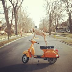 Dog on an Orange Vespa - from a Dog on a ... Project http://www.letko.info/archives/25.html