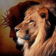 Image result for jesus lion of judah pictures