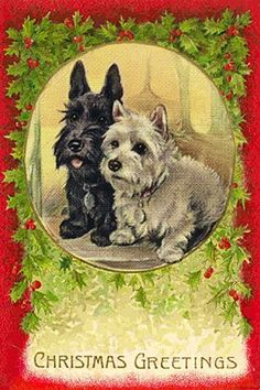 Scottie and Westie keep a watchful eye at Christmas.  #ScottishTerrier