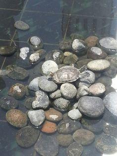 Turtles!!! From vera cruz