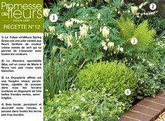 Recette N°12:  1) La Tulipe viridiflora Spring Green 2) Le Dicentra spectabilis Alba 3) La Dryopteris affinis 4) Buis boule