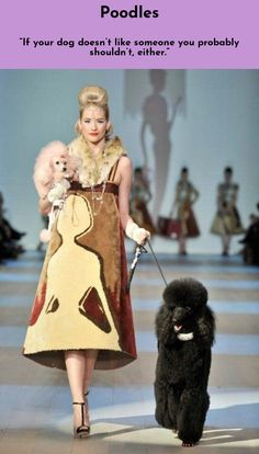 Learn about Poodles #poodlelove  Just click on the link for more