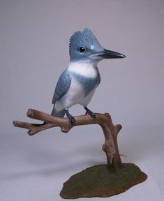 This is an original, fully detailed carving of a lifesize belted male Kingfisher. The bird is hand carved from basswood and hand painted with acrylic colors. Wood Carving For Beginners, Kingfisher, Hand Carved, Birds, Belt, Animals, Sales Tax, Acrylics, Bronze