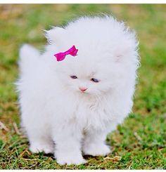 Toooooo Cute