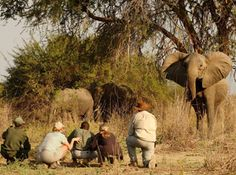 Safari to Time and Tide Luwi with Africa Travel Resource Kenya Travel, Africa Travel, African Vacation, Travel Tickets, Safari Holidays, Elephant Walk, Safari Adventure, Out Of Africa, African Safari