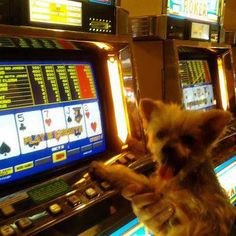 Cats And Dogs Slot Machine